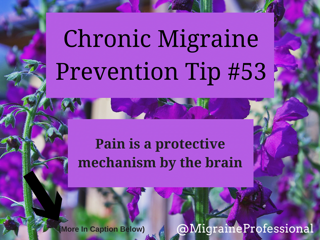 Chronic Migraine Prevention Tip #53 Pain Protects